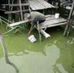 Водоросли атаковали ростовский водоканал