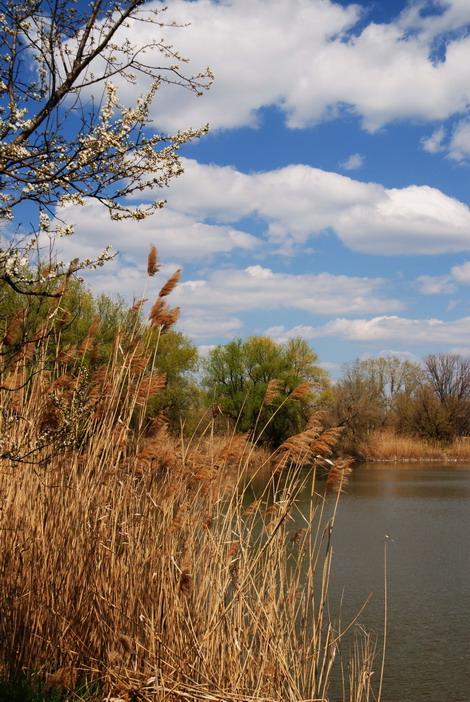 Хорошей воды в Ростовской области мало