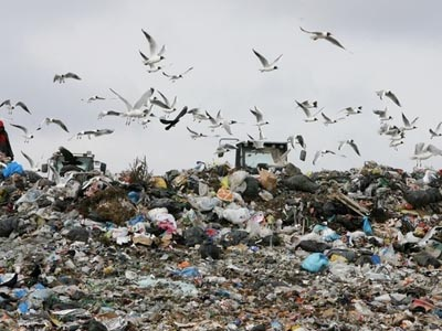 Чайки открыли сезон охоты на мусор