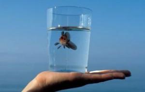 Вода - это жизнь
