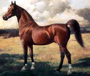 Лошадь прекрасна сама по себе...
