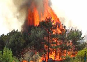 Пожар в лесу.