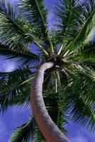 В Ростове вырастут пальмы