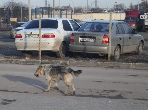 Бродячие собаки станут особо опасными в условиях недостатка корма.