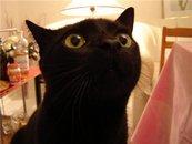 Черная кошка - эмблема печали