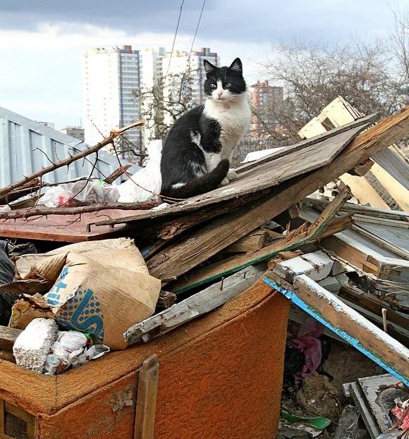Кошка на мусоре.