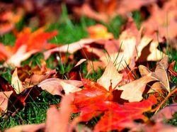 Осенние листья под защитой.