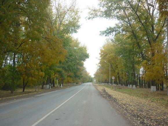 Дорога в Янтарный.