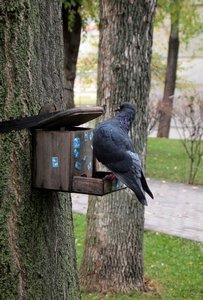 Обитатели парка замерли в ожидании своей участи.
