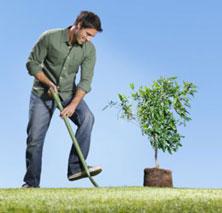 Посадить дерево.