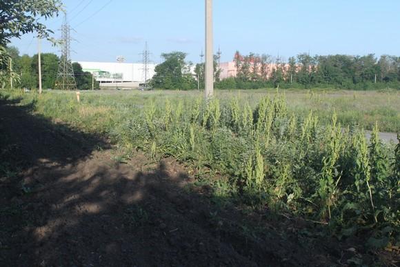 А на этом земельном участке строится «Мечта». Отсюда видны гипермаркет «Ашан» и другие торговые объекты.
