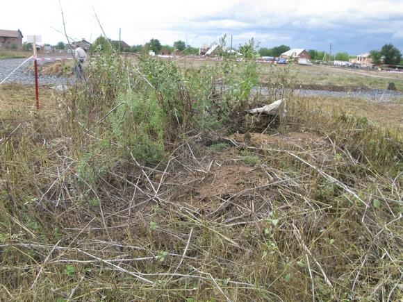 Вот пример очковтирательства: до дальних участков прессу не пустили, здесь не то что не разровняли землю, даже траву не скосили...