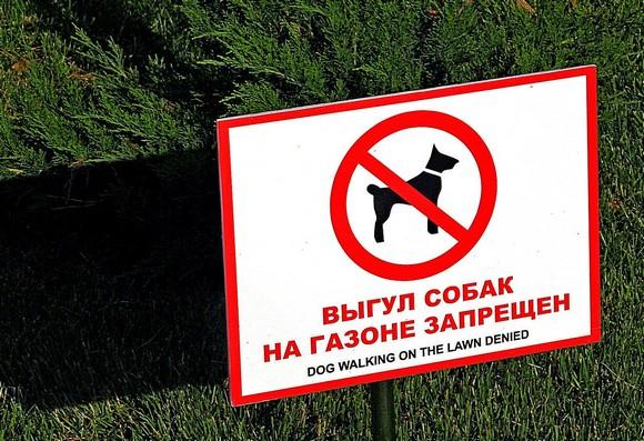 Знаменитая фраза советских времен: «По газонам не ходить» адресовалась человеку. А собаки бегали, какой с них спрос? На набережной Ростова, ориентирующейся «на Европу», все с точностью до наоборот: газоны предназначены для людей, а не животных.
