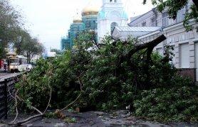 Древопад в Ростове: причины и следствия.