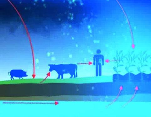 От радиации страдают люди и животные.