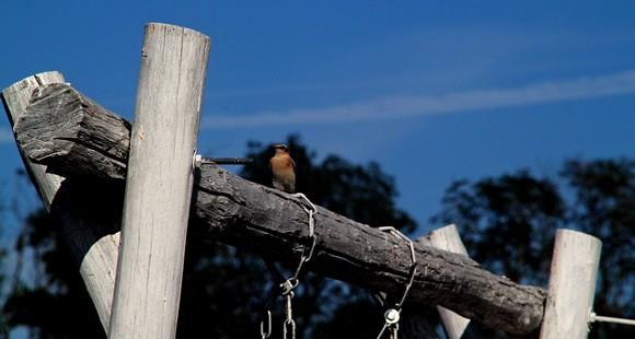Парк охотно посещают не только люди, но и дикие птицы.