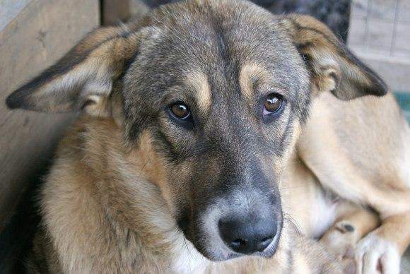 Собак Ростова ждет стерилизация.